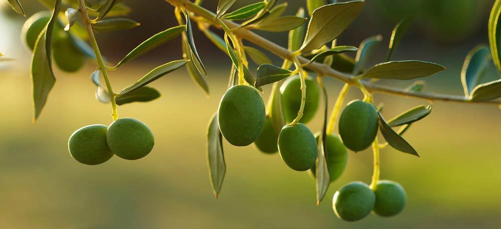 Olivenöl Etikett