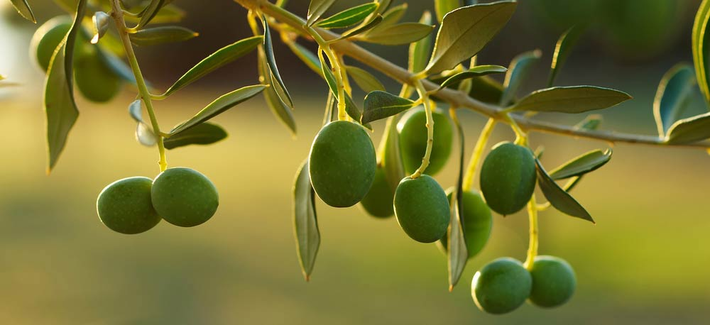 Olivenöl - Güteklassen in Deutschland