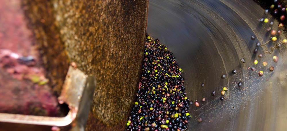 Qualität Olivenöl