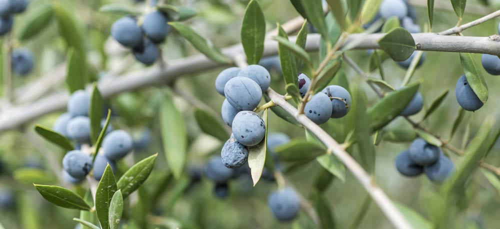 Olivenöl lagern