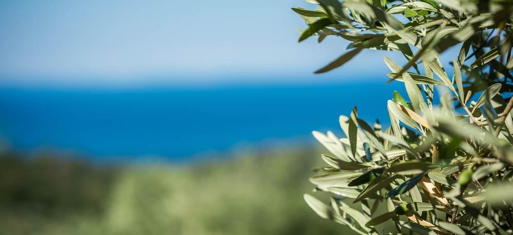 Regionale Unterschiede von Olivenöl